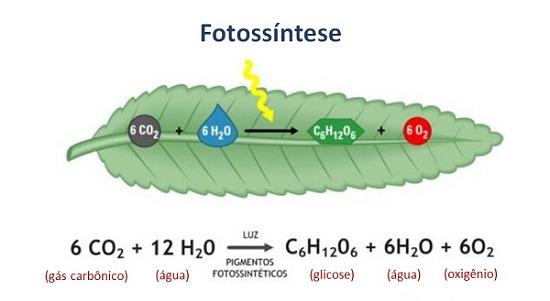 Equação química da reação de fotossíntese