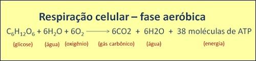 Equação química da reação de respiração celular